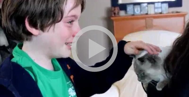 Garotinhos se emocionam ao reencontrar gatinho desaparecido há 2 meses