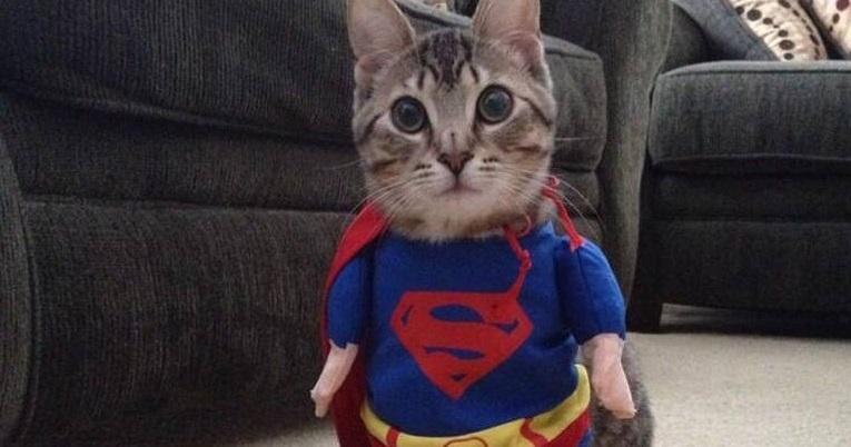 As 20 melhores fantasias para gato