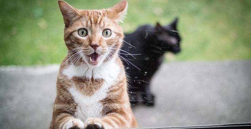 10 coisas que os gatos odeiam