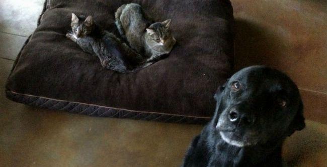 20 cães inconformados com alguns gatos sacanas