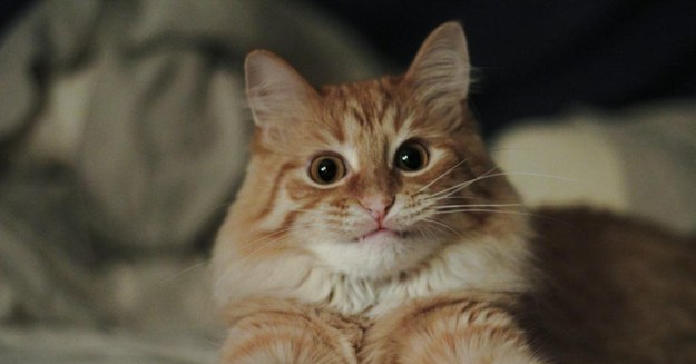 12 Reações que temos no dia a dia representadas por gatos