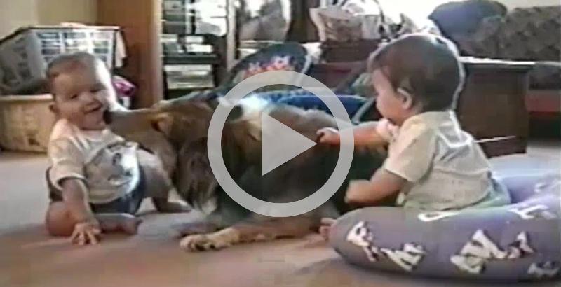 Vídeo com cães e bebês brincando juntos faz sucesso