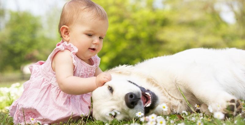 7 melhores raças de cachorro para crianças