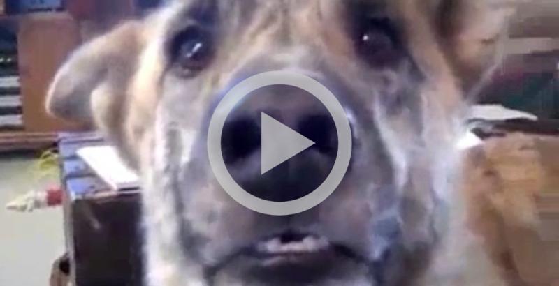 Homem não divide comida e cachorro fica indignado