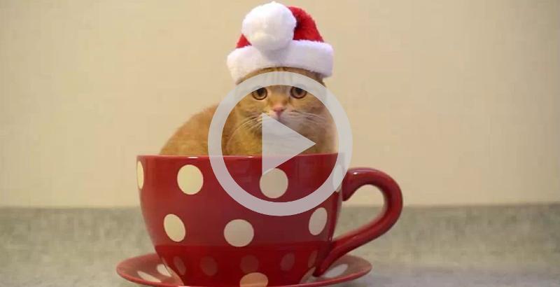 Esse gatinho será uma das coisas mais fofas desse Natal