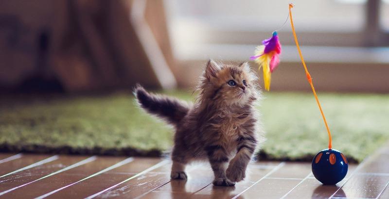 Brinquedos e Brincadeiras para Gatos