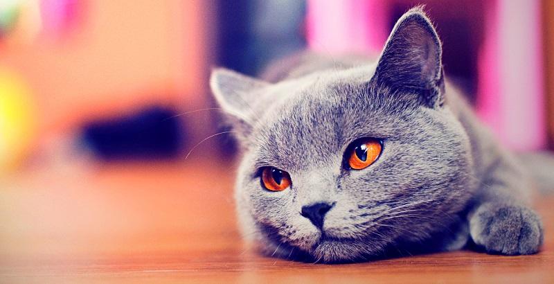 9 motivos para você ter um gato