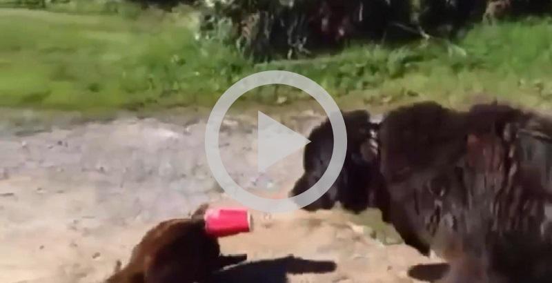 Cachorro salva gato com a cabeça presa e surpreende todos