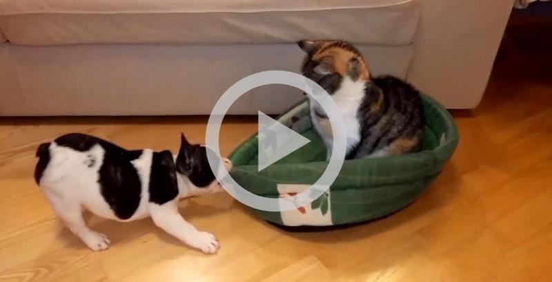 Cachorro e gato brigando pela caminha é o vídeo mas fofo da história