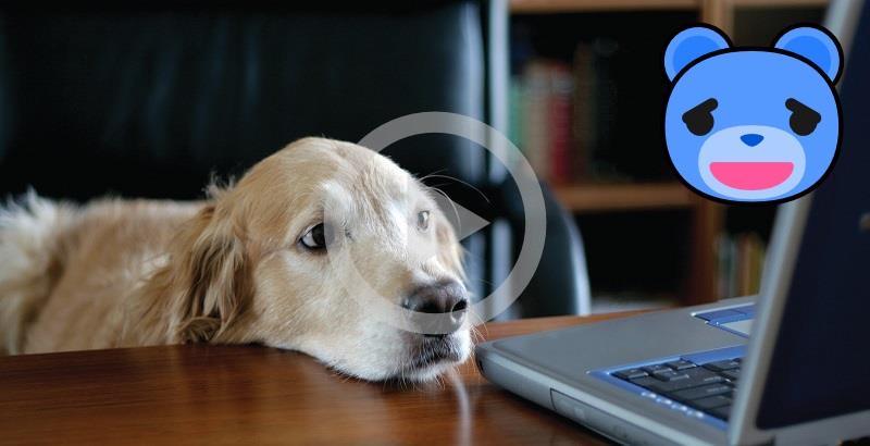 Cães matando a saudade de seus donos pela internet