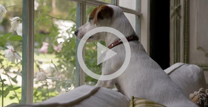Você tem um cachorro te esperando em casa? Então assista
