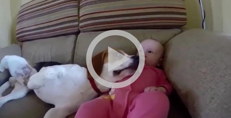 Cãozinho babá que simplesmente ama sua irmãzinha humana