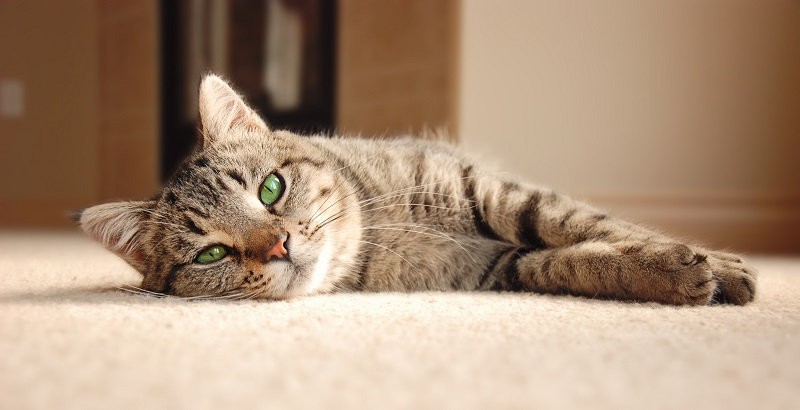 Cuidados com gatos idosos