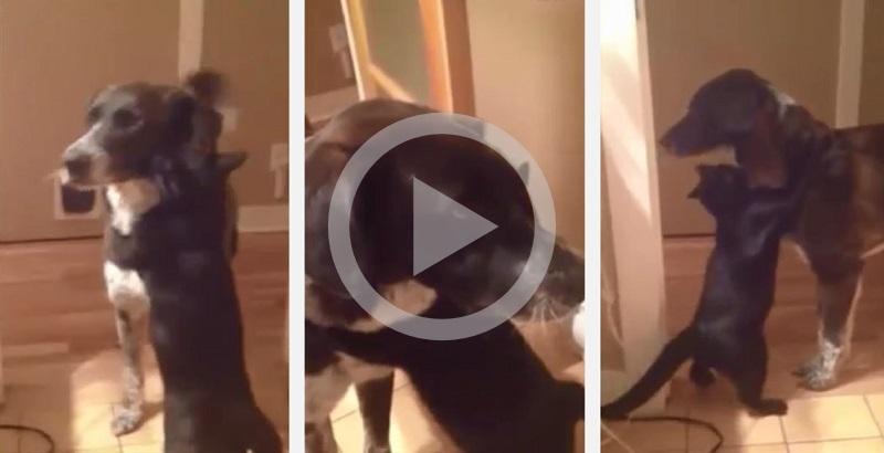 Gato reencontra seu amigo canino e tem reação comovente
