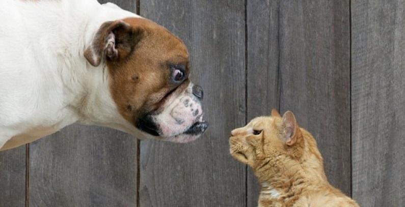 Como apresentar um gato para um cachorro pela primeira vez