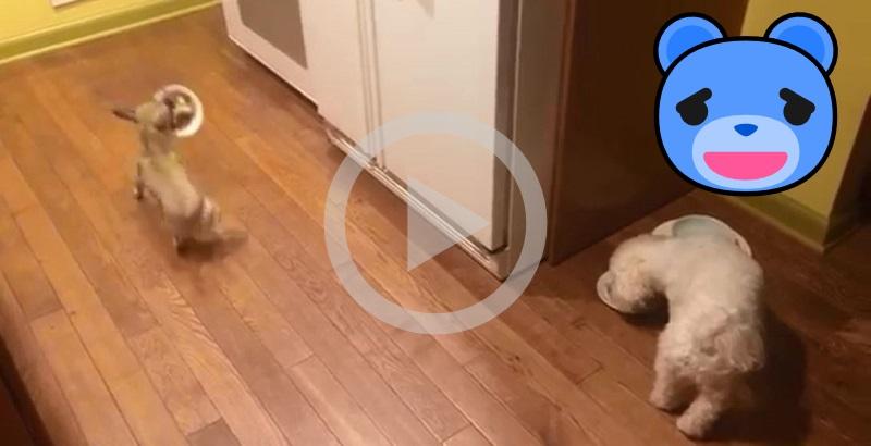 Cãozinho adotado que odeia comer sozinho faz sucesso na internet
