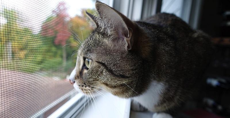 Como evitar que o gato saia de casa