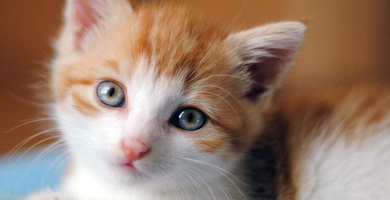 Como cuidar de gatinho recém nascido