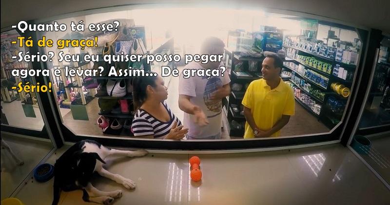 ONG troca animais à venda em pet shop por outros para adoção