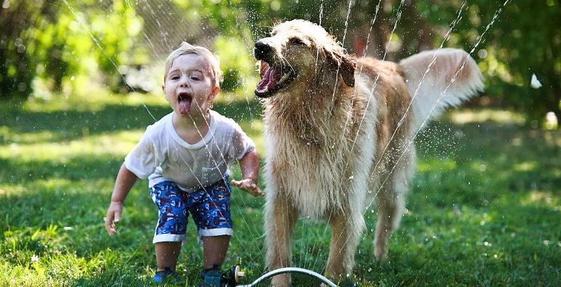 Uma criança pode ter um cachorro?