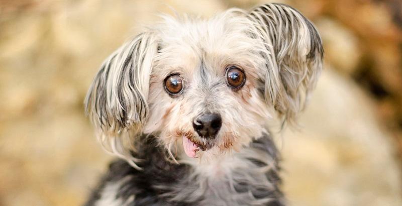 14 macetes que todo dono de cachorro deve saber