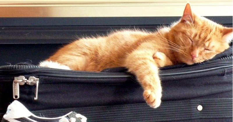 Vou viajar! Posso deixar meu gato sozinho?