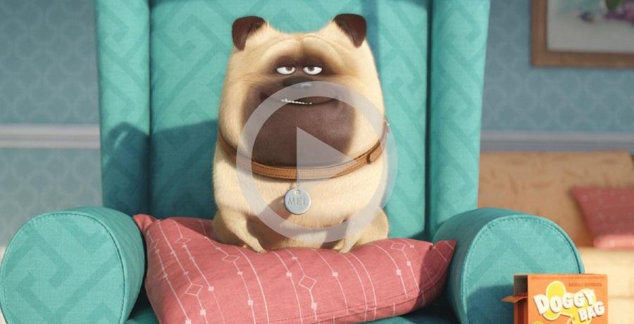 Pets: A vida Secreta dos bichos (Trailer Oficial)