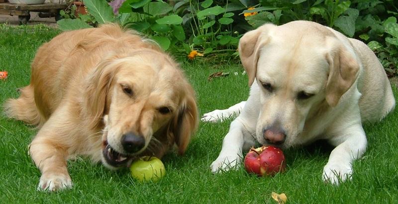 As 6 melhores frutas e vegetais para cachorro
