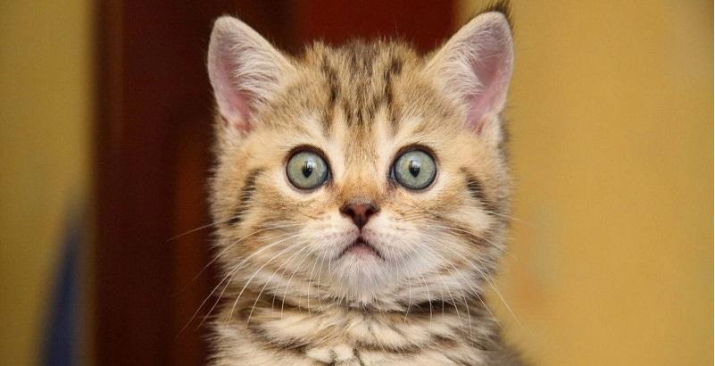 9 macetes que todo dono de gato deve saber