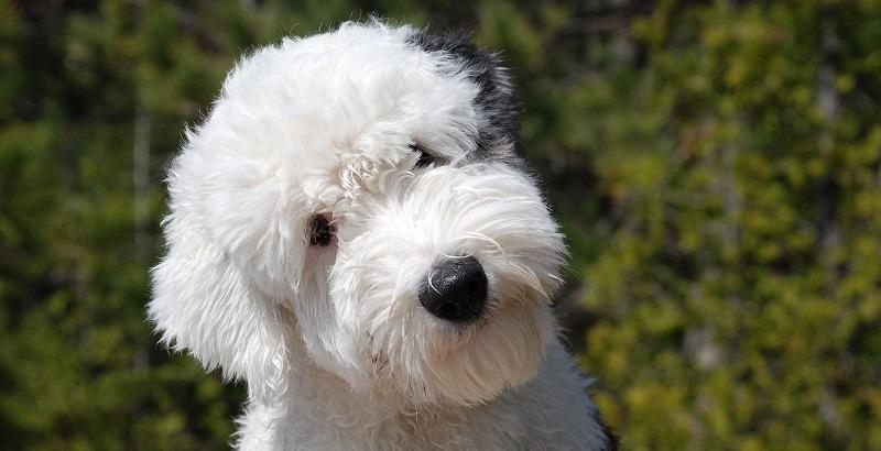 9 produtos geniais para donos de cães e gatos