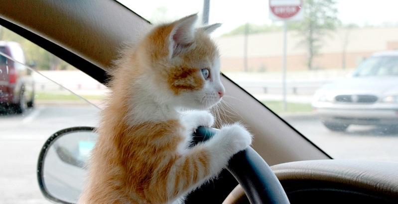 10 dicas para transportar seu gato que você precisa saber
