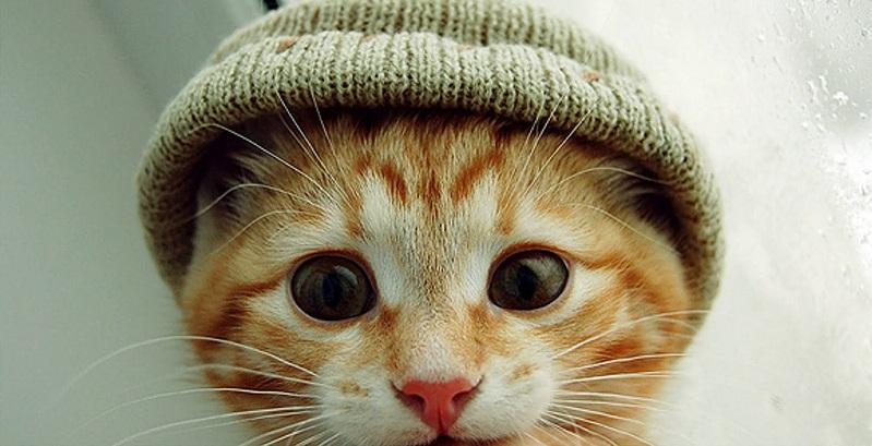 Cuidados com o gato no inverno