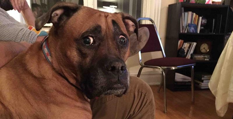 9 erros terríveis cometidos por donos de cachorro