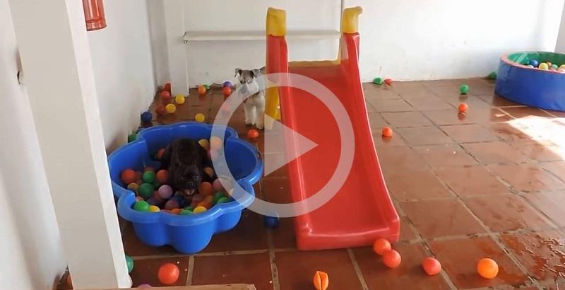 Cãozinho se divertindo na piscina de bolinhas