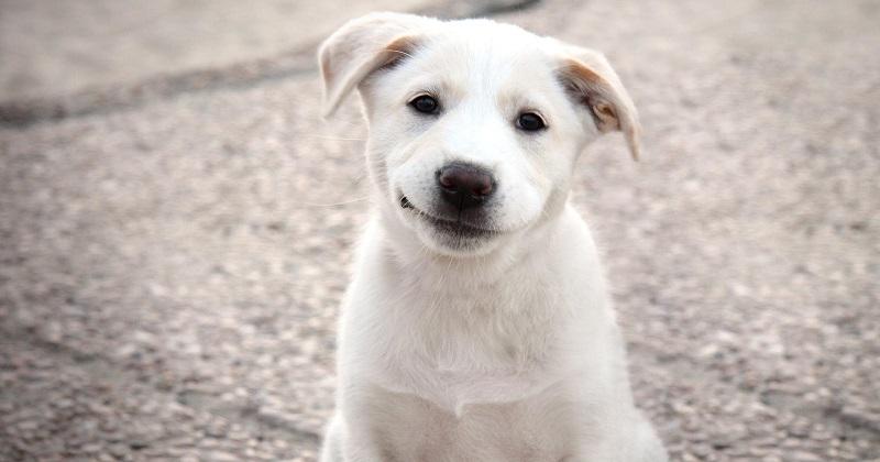 10 coisas que seu cachorro gostaria muito que você soubesse