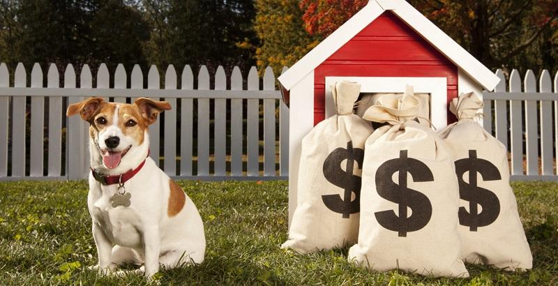 7 maneiras criativas de economizar com seu cachorro