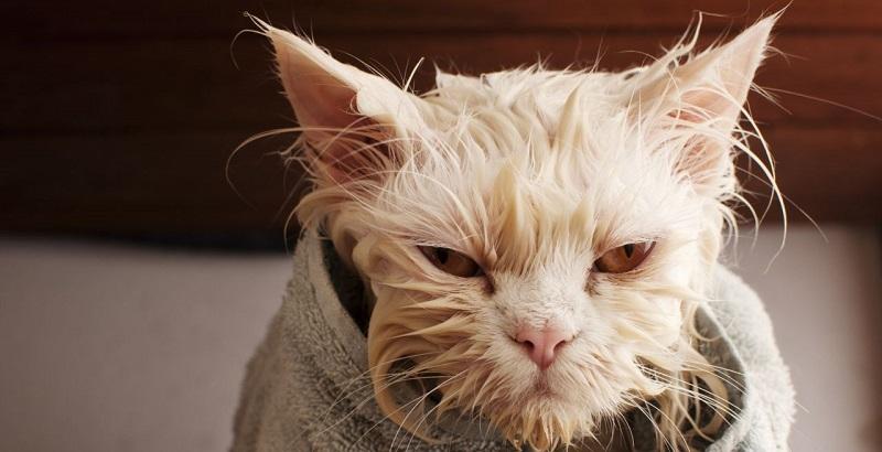 Gatos precisam tomar banho?