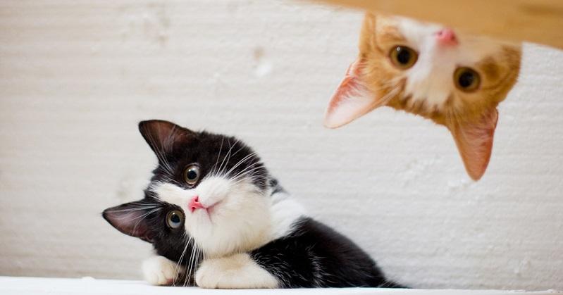 14 macetes que todo dono de gato deve saber