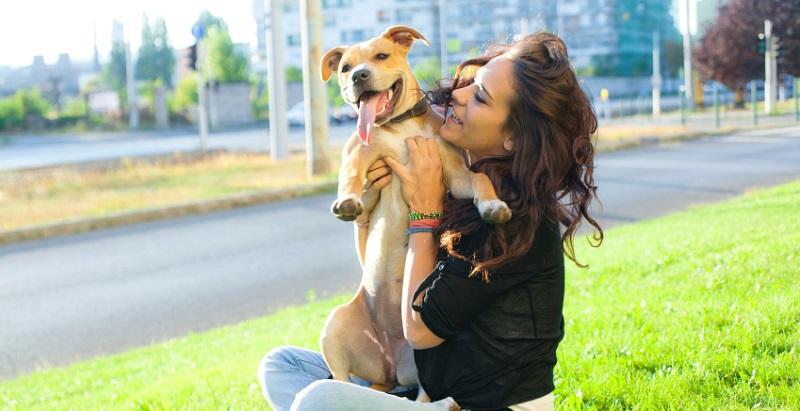 7 produtos geniais para donos de cachorro