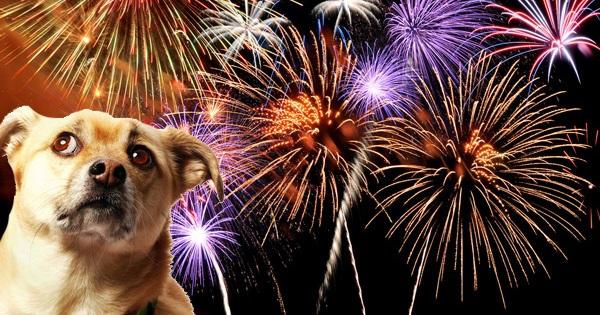 Como acalmar seu cachorro durante os fogos de artifício