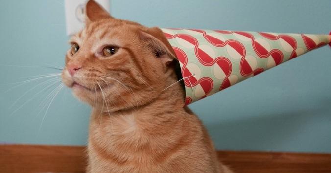 Qual a idade do seu gato se ele fosse um humano?