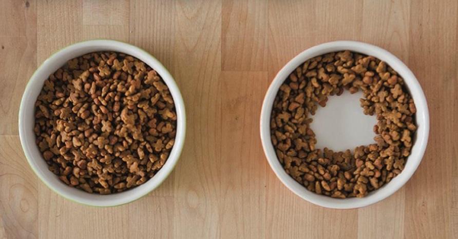 Os gatos deixam ração na beirada do pratinho por 2 razões