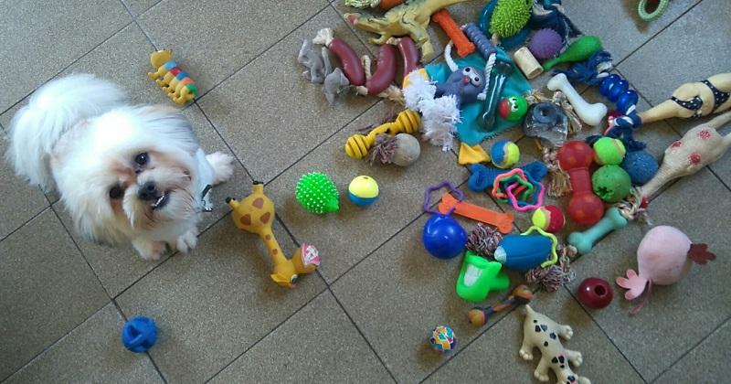 Quiz: Descubra qual é o brinquedo perfeito para seu cachorro