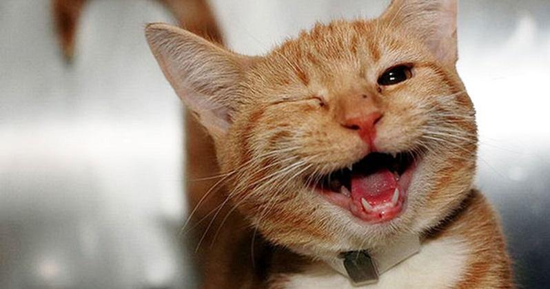 Gato com pulgas. Como resolver?
