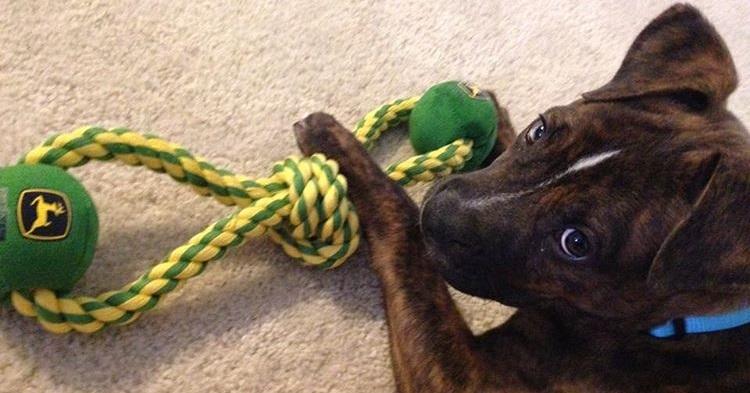 Brinquedos para cachorro: As 6 regras de ouro