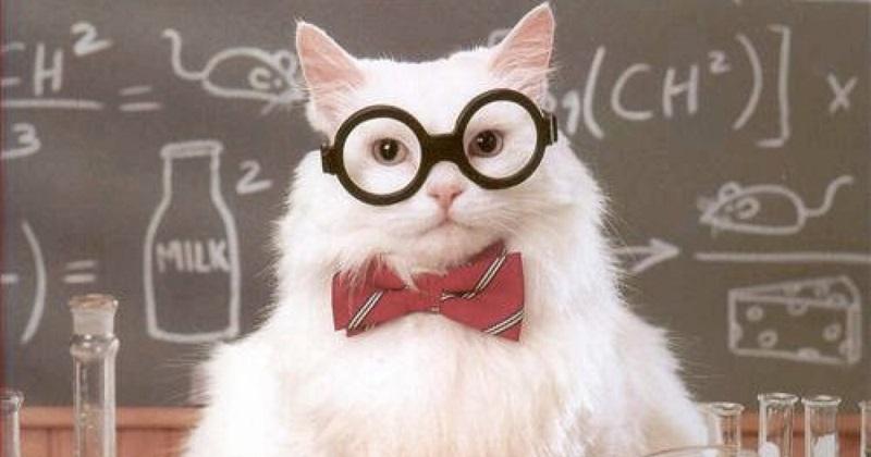 Quiz: Só quem entende muito de gatos vai acertar mais que 70%