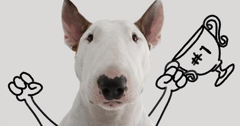 6 passos para tirar fotos de cachorro memoráveis