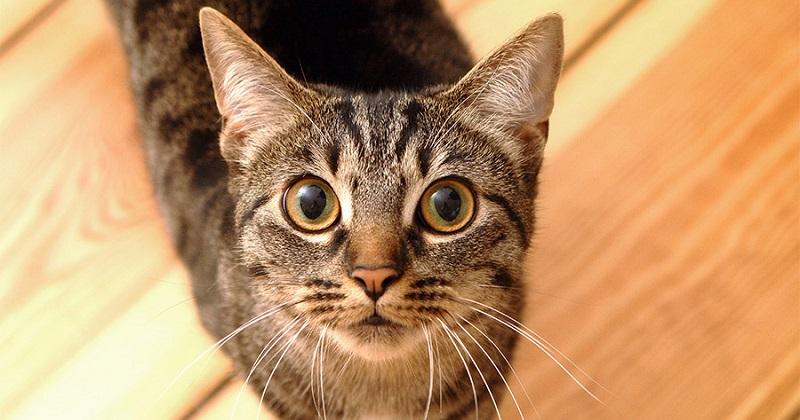 Higiene do gato: Limpeza dos olhos e orelhas e corte das unhas