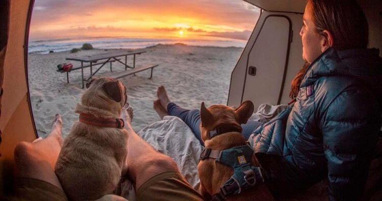 Leve seu cachorro para acampar
