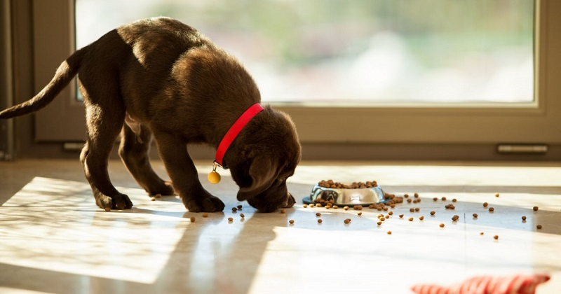 Saiba escolher o comedouro ideal para seu cachorro